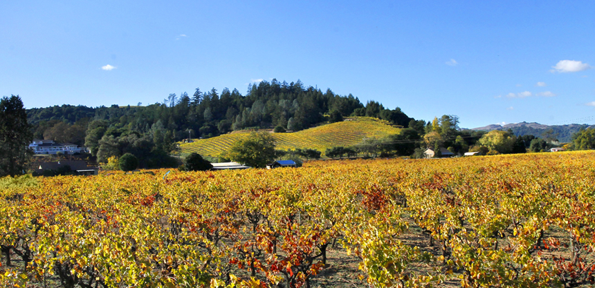 Historic Dry Creek Valley